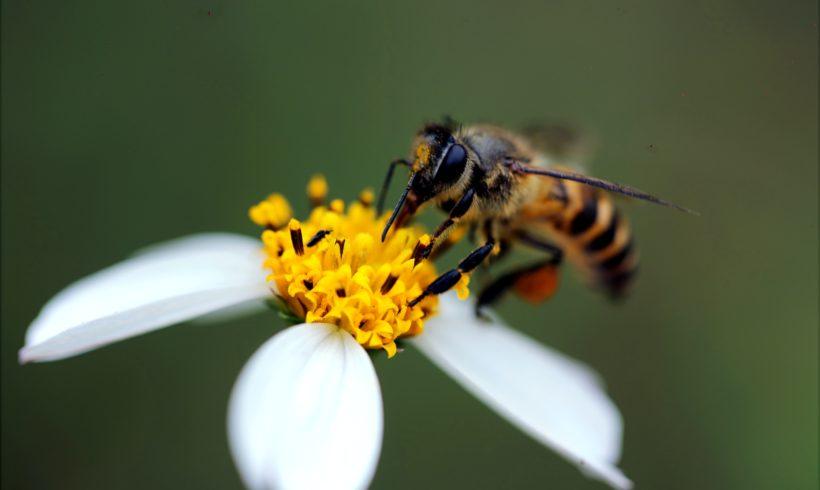 Jeux de rôle autour de l'apiculture